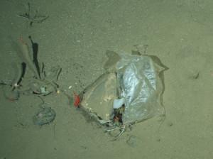 Plastiktüte im HAUSGARTEN